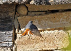 Aplazamos las jornadas ornitológicas para la primavera.