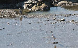 Disfrutando de la ruta ornitológica de Gerbe