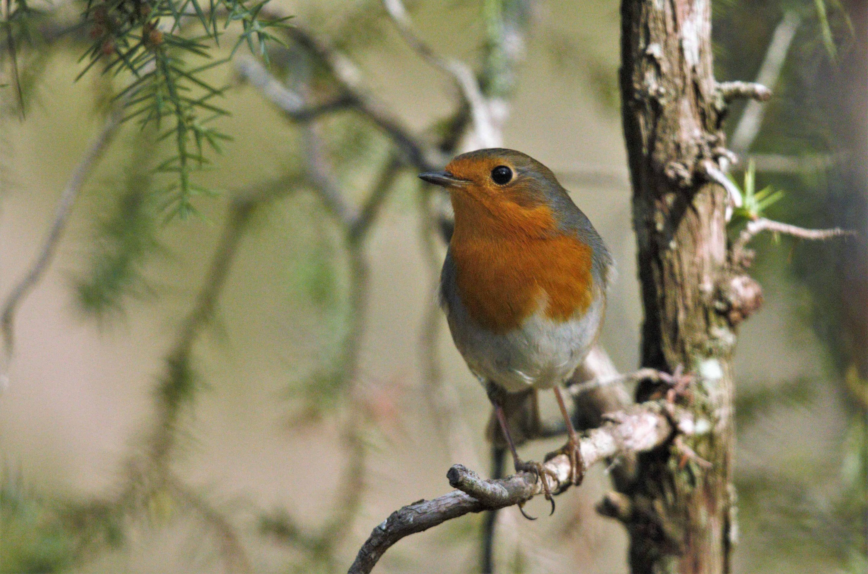 Hide Birding Sobrarbe