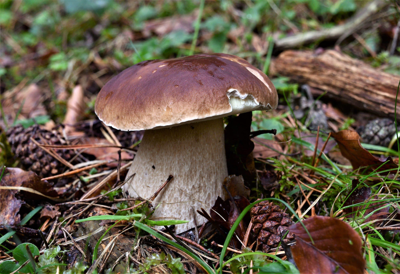 Micología, otoño